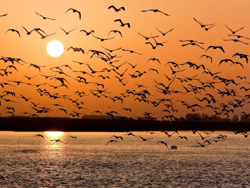 Animals Birds5