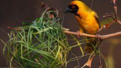 Animals Birds6