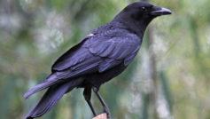 Animals Birds7