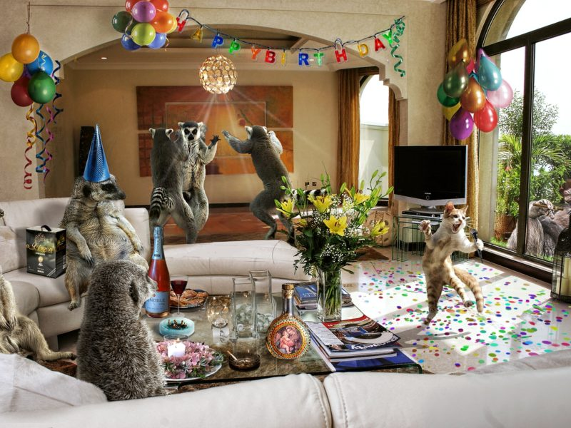 Funny Celebration Humor Animals 80607 1920×1281