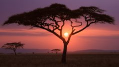 African Sunset Wide