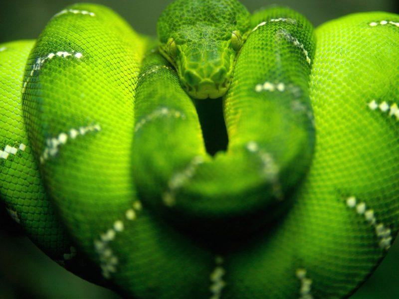 Amazing Green Snake