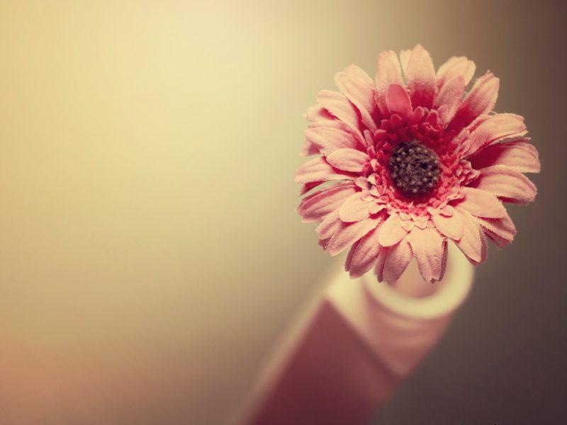 Beautiful Fabric Flower 1280×720