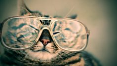 Cat With Glasses Funny