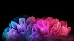 Colorful Flowers Dark Background 1280×800