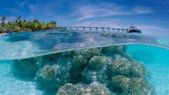 Corals In The Shallow Sea