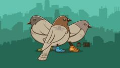 Funny Pigeons With Funny Shoes