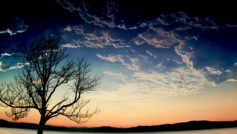 Naked Tree Sunset Hd
