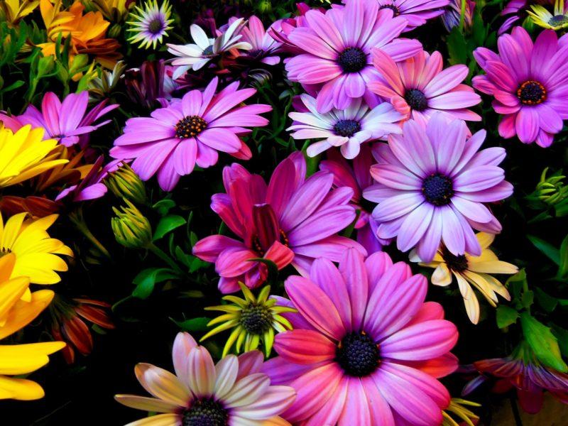 Purple Yellow Daisy Flowers 2560×1440