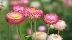 Summer Flower Meadow 1280×800