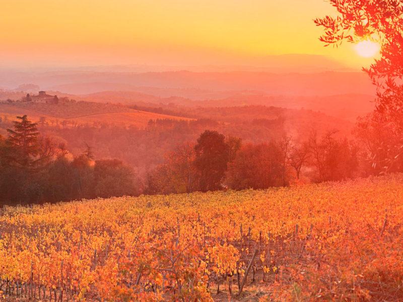 Vineyard Sunset Siena Tuscany Italy Hd
