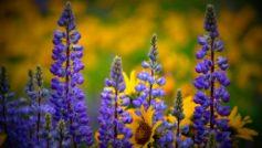 Washington Wildflowers 1280×800