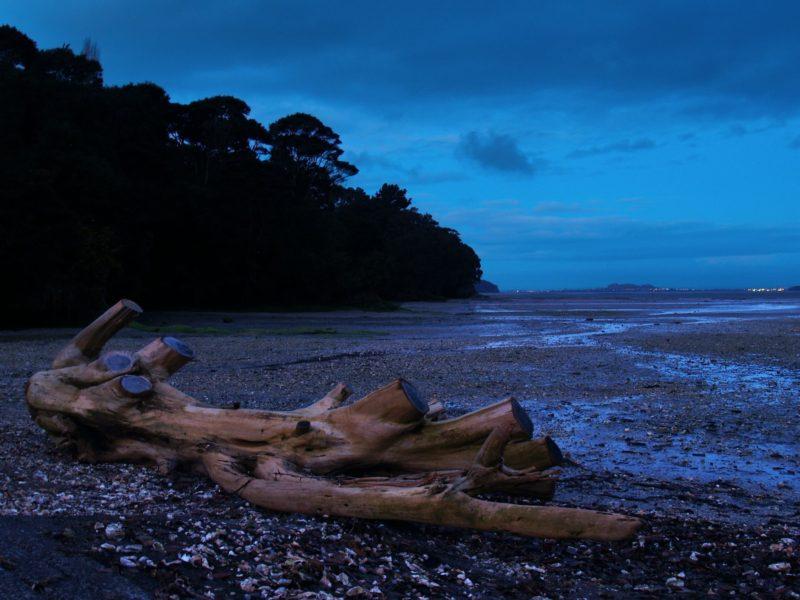 Wood Bay Titirangi Auckland.