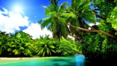 Y Summer Palms Sunshine Beach Nature