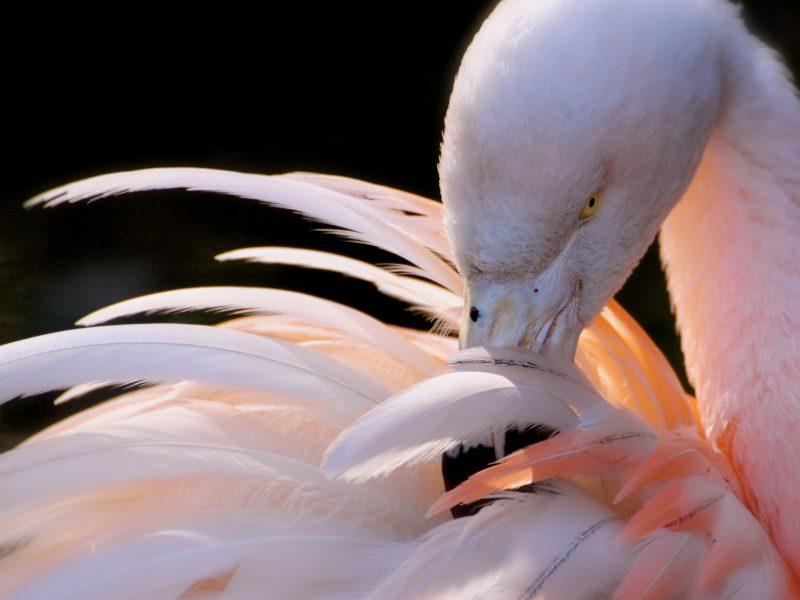 Animals Birds18