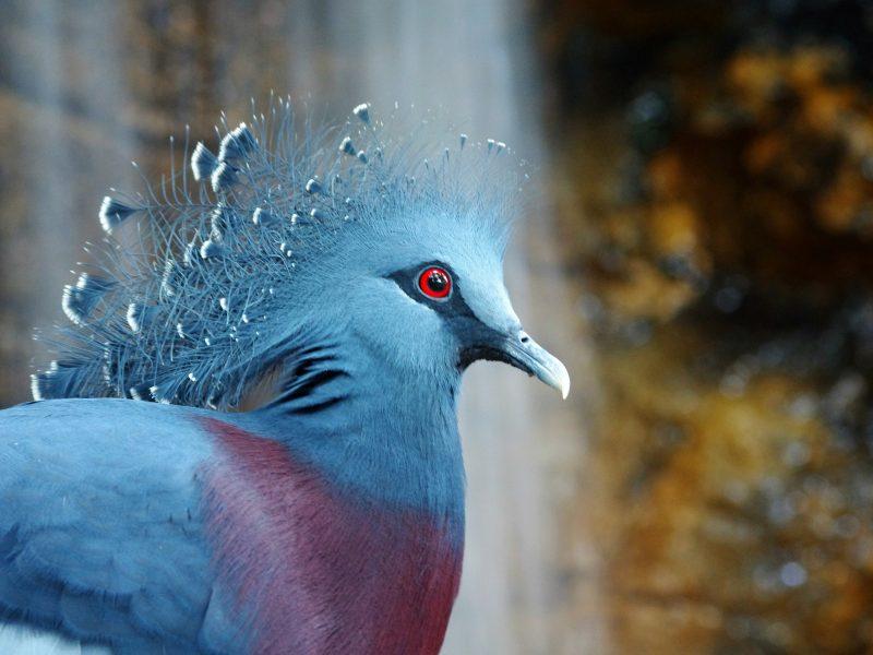 Animals Birds23