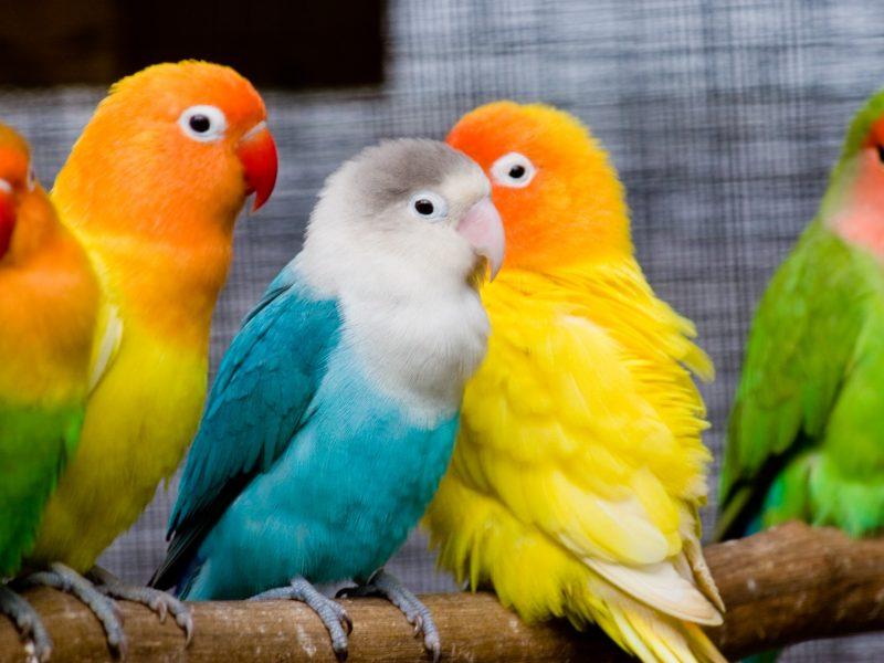 Animals Birds24
