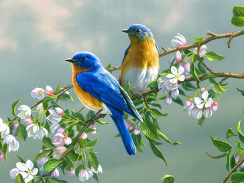 Animals Birds25