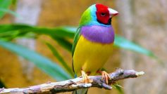 Animals Birds30