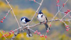 Animals Birds31