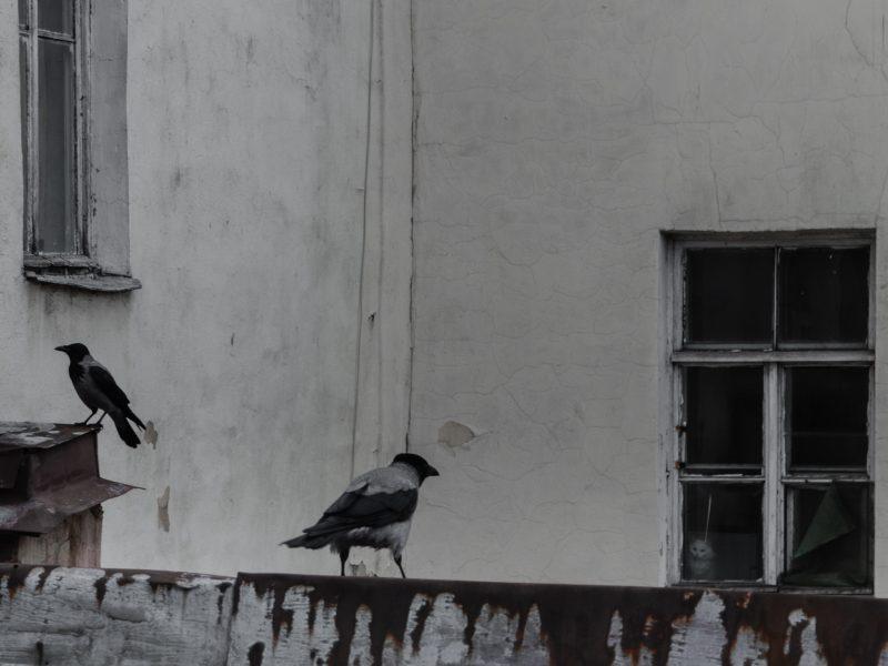 Animals Birds32