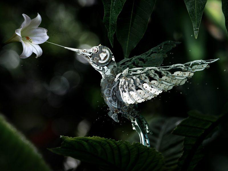 Animals Birds47