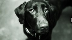 Animals Dogs Monochrome