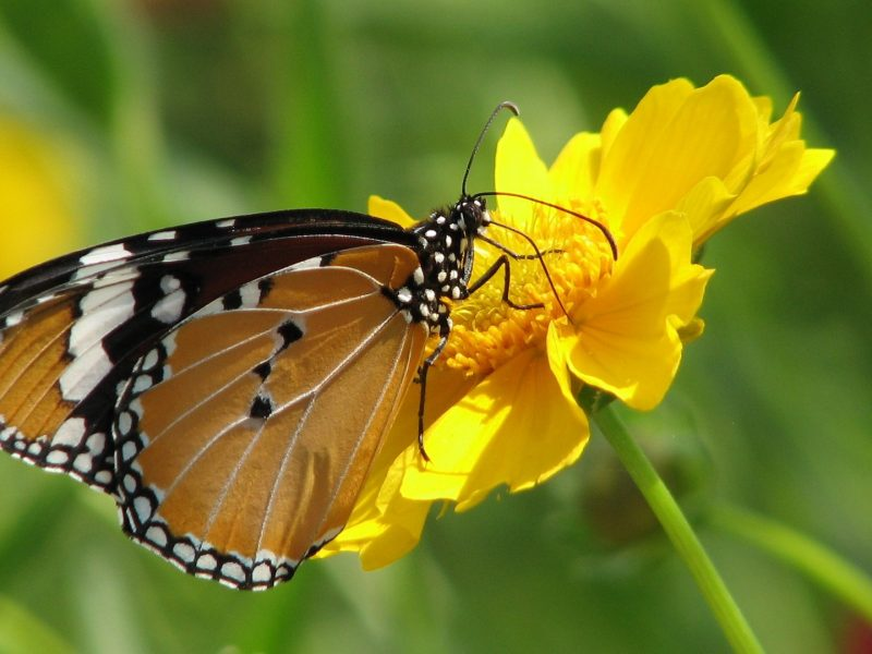 Awesome Butterfly