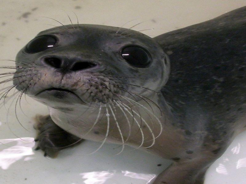 Baby Seal Selfie
