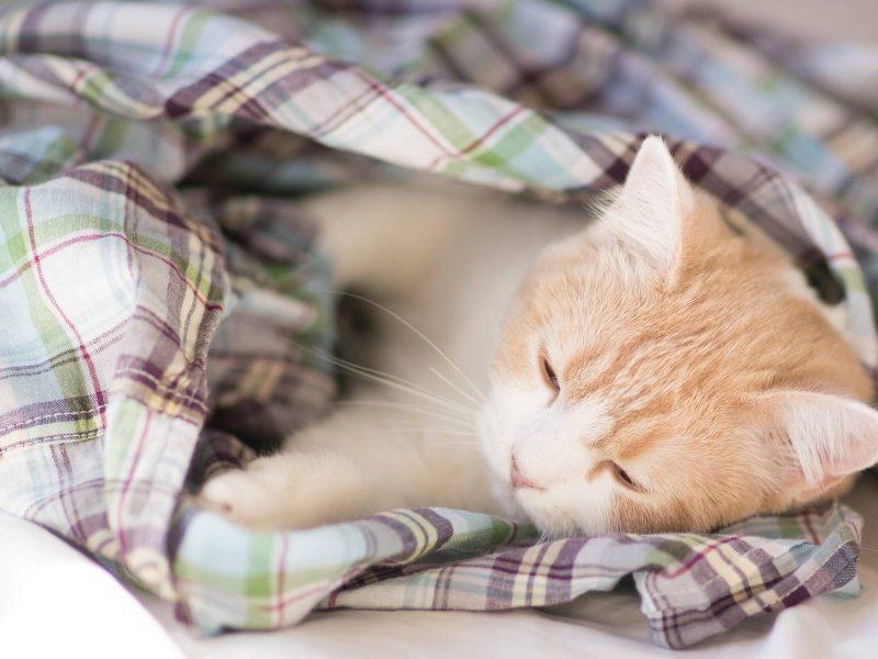 Beautiful Baby Cat