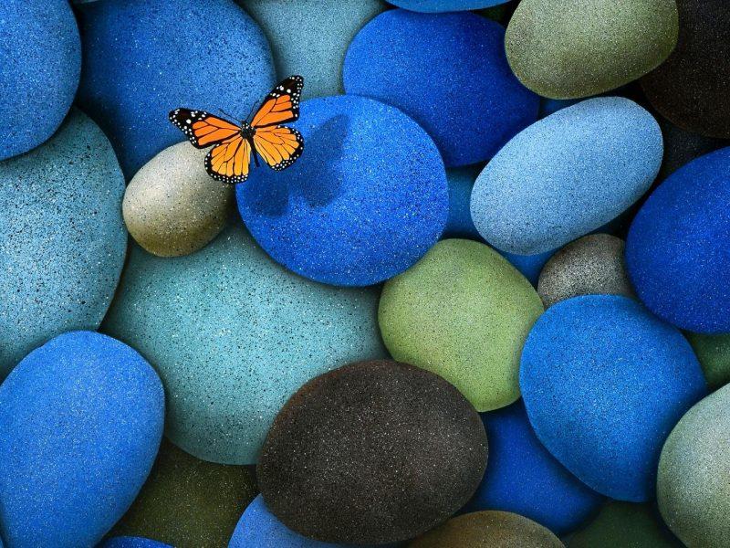 Beautiful Butterfly Hdwallpaper