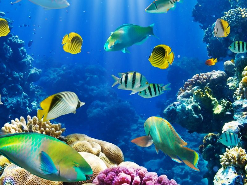 Beautiful Fishes In Water