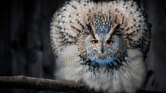 Beautiful Owl Look Like Peocock 2880×1800