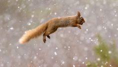 Beautiful Squirrel1