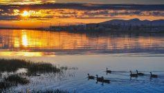 Beautiful Sunset Beautiful Birds