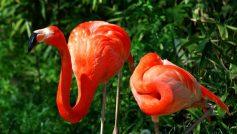 Pretty Flamingo Couple