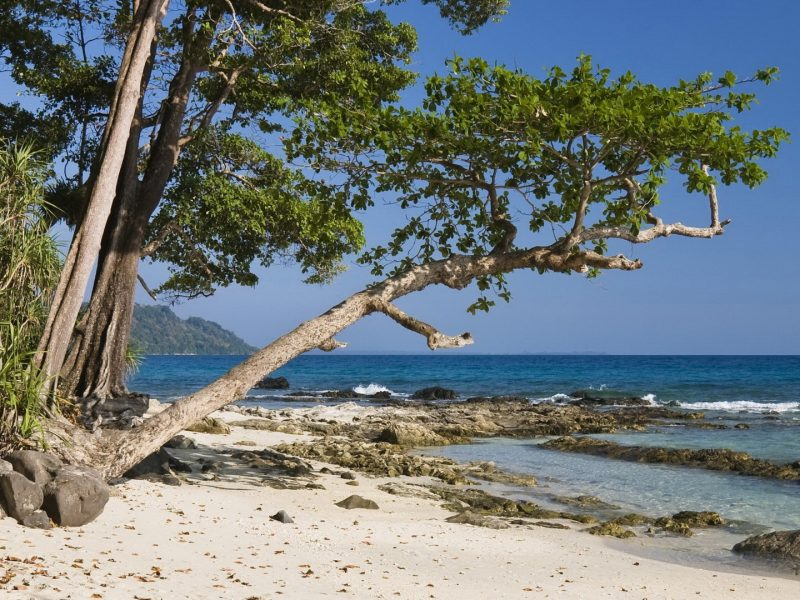 Beach Tree View