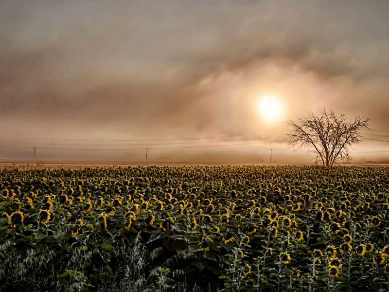 Sunset97